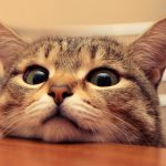 【かわいい】癒しの猫画像まとめ