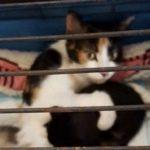 人間に殺されかけた母猫が、子猫を守るためにとった行動が泣ける…
