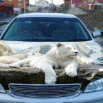 【DQN制裁】迷惑駐車のDQN車をおっちゃんが・・・