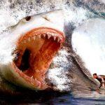 【閲覧注意】クジラ2頭を丸呑みする巨大サメ・メガロドンが生きていた…