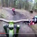 【動画あり】森でサイクリングしていたら野生のヒグマが全力で追いかけてくる動画が話題に