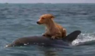 犬を乗せたイルカ