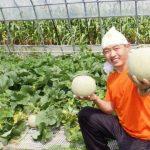 【悲報】年商1憶のメロン農家、何者かに除草剤をまかれ6600玉全滅…。