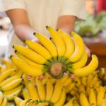 バナナがヤバイ!?新たな病原体により絶滅の可能性も・・・