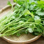 パクチーの健康効果がものすごい…!野菜不足の人はすぐに食べるべき!