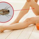 ダニによる虫刺されに注意!毎日フンに囲まれているかも…。