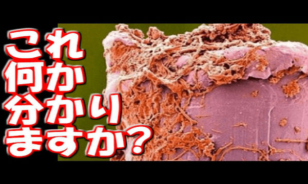 【クイズ】これは何でしょう?皆が毎日口に入れる道具です!汚すぎる・・・