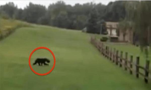 【動画あり】熊から逃げるカップル。しかし熊の頭に乗っているモノを見てさらに大パニック!
