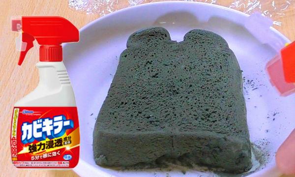 【閲覧注意】カビだらけの食パンにカビキラーを噴きかけた結果