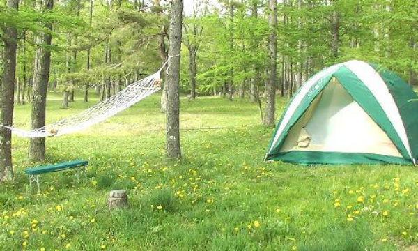 【驚愕】キャンプ場で寝ていたら、頭からガリガリと音がする。→音の正体に背筋が凍る…