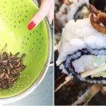 肉食→菜食→昆虫食!?「完全菜食国家」を目指すスゥエーデンのキチガイな国策www