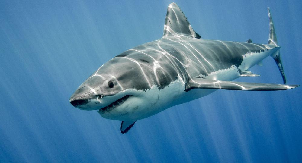 【動画あり】サメの水槽に触った男性、驚くべき悲惨な結末が待っていた...。