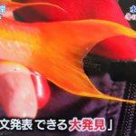 【朗報】アイドルのTOKIOさん、またしても歴史的大発見(論文発表レベル)