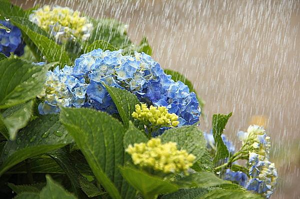 その不眠は梅雨だから!この時期に顕著な気象病とは?