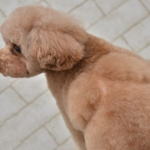 【動画】六本木で働くキャバ嬢が愛犬を虐待…!?怯えたプードル犬が…酷過ぎる…