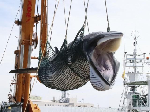 商業捕鯨再開も問題は山積み?