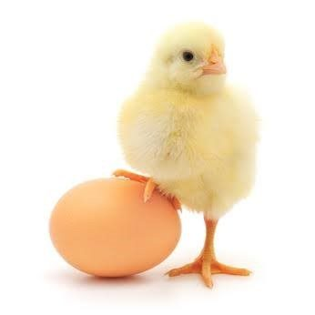 卵が先?ニワトリが先?大激論が決着した!?