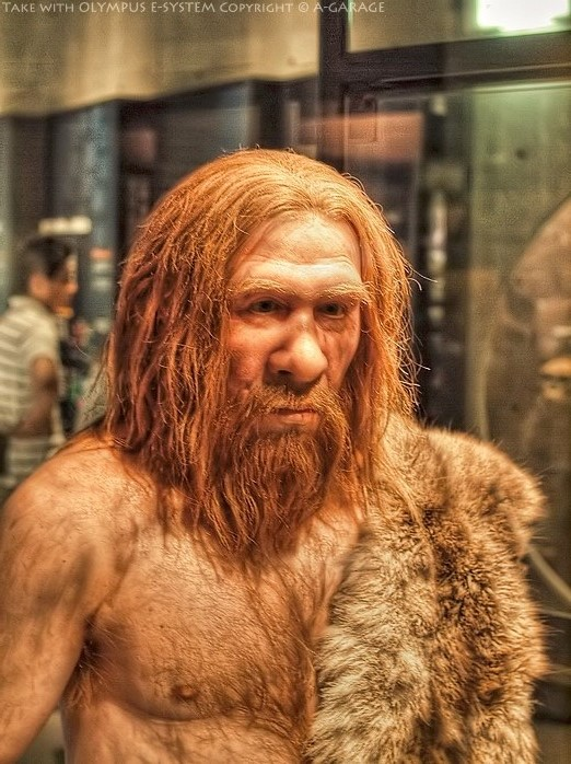 ネアンデルタール人は人類が絶滅させたとする定説を新型コロナウイルスが覆すかも?